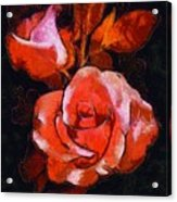 Roses Painted And Drawn Acrylic Print