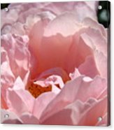 Roses Pink Rose Flower 2 Rose Garden Art Baslee Troutman Collection Acrylic Print