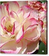 Roses Pink White Rose Flowers 4 Rose Garden Artwork Baslee Troutman Acrylic Print