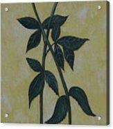 Long Stem Roses Acrylic Print