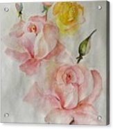 Roses Scent Acrylic Print