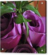 Roses Up Close Acrylic Print