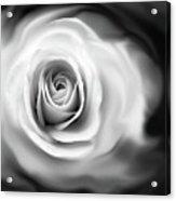 Rose's Whisper Black And White Acrylic Print