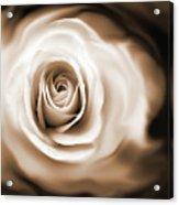 Rose's Whisper Sepia Acrylic Print