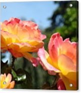 Roses Yellow Roses Pink Summer Roses 4 Blue Sky Landscape Baslee Troutman Acrylic Print