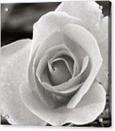 Rosewood009 Acrylic Print