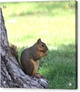 Roswell Squirrel Acrylic Print