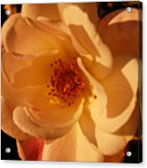 Rosy Afternoon 1 Acrylic Print