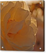 Rosy Afternoon 2 Acrylic Print