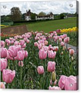Rosy Field Acrylic Print