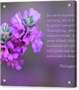 Rosy Lavender Sage Blossoms Phil.4 V 6-7 Acrylic Print