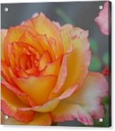 Rosy Outlook Acrylic Print