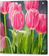 Rosy Pink Tulips Acrylic Print by Sharon Freeman