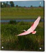 Rosy Soar 61 Acrylic Print