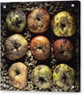 Rotten Apples Acrylic Print