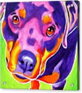 Rottweiler - Summer Puppy Love Acrylic Print by Alicia VanNoy Call