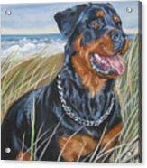 Rottweiler Beach Acrylic Print