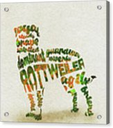 Rottweiler Dog Watercolor Painting / Typographic Art Acrylic Print