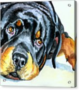 Rottweiler Acrylic Print by Lyn Cook