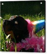 Rottweiler Princess Acrylic Print