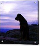 Rottweiler Sunrise 1 Acrylic Print