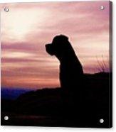 Rottweiler Sunrise Acrylic Print