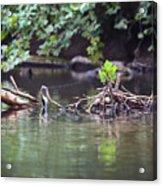Roubidox Creek Acrylic Print