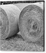 Round Hay Bales Black And White  Acrylic Print by James BO  Insogna