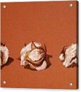 Row Of Cotton Acrylic Print