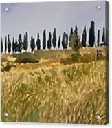 Row Of Cypress Trees, Tuscany Acrylic Print
