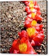Row Of Flowers Acrylic Print
