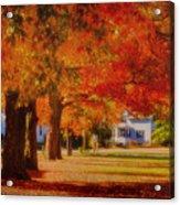 Row Of Maples Acrylic Print
