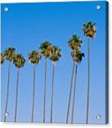 Row Of Palm Trees Acrylic Print