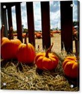 Row Of Pumpkins Sitting Acrylic Print