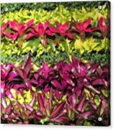 Rows Of Bromeliads Acrylic Print