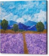 Rows Of Lavender In Provence Acrylic Print
