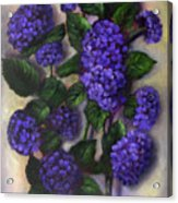 Royal Blue Hydrangea Acrylic Print