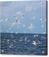 Royal Blue Ocean Tern Acrylic Print