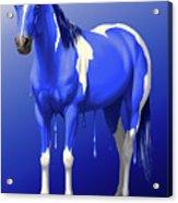 Royal Blue Wet Paint Horse Acrylic Print