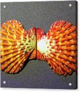 Royal Cloak Scallop Seashell  Acrylic Print