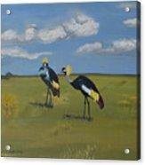 Royal Cranes Acrylic Print