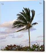 Royal Palm Tree Acrylic Print