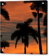Royal Palms Acrylic Print