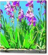 Royal Purple Acrylic Print