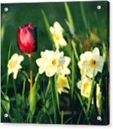 Royal Spring Acrylic Print