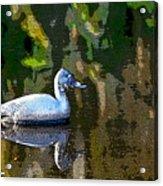 Rubber Duck Acrylic Print