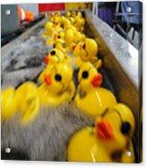 Rubber Duckies Acrylic Print