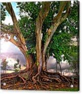 Rubber Tree Acrylic Print