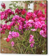 Ruby Like Flora Acrylic Print