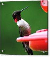 Ruby Red Throated Hummingbird On Feeder Acrylic Print